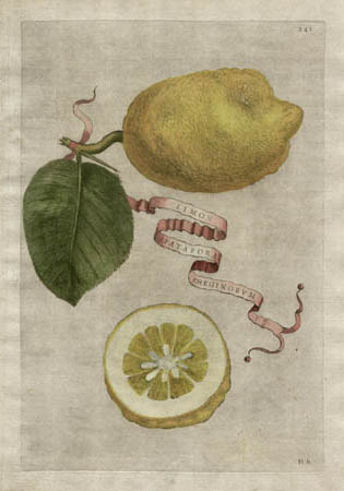 Plate 214, Limon Spatafora