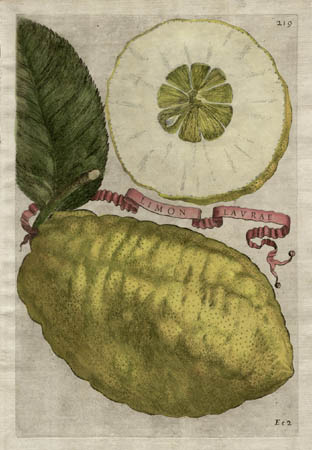 Plate 219, Limon Laurae
