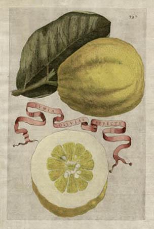 Plate 327, Lumia Ollulae Aspectu