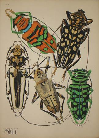 Seguy Longhorn Beetles