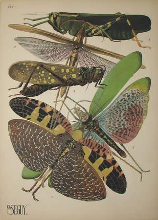 Seguy Grasshoppers