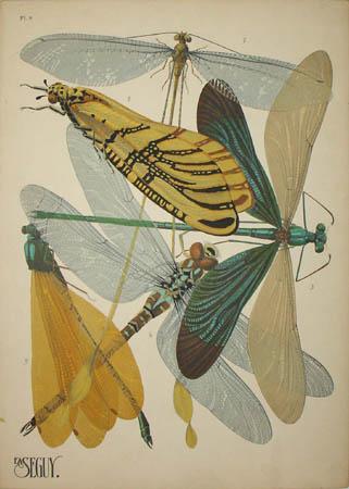 Seguy Dragonflies & Damselflies