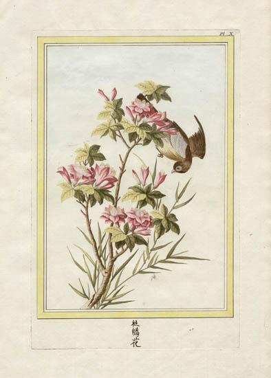 Muggletonian Celestial Prints