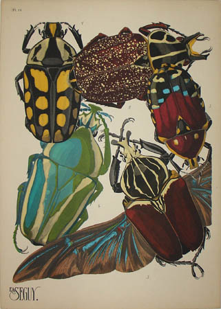 Seguy Beetles