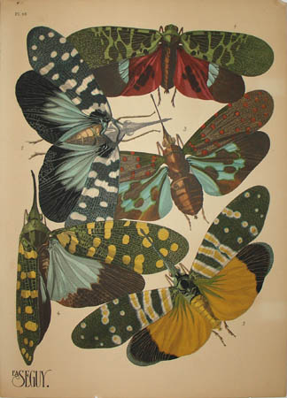 Seguy Insects, Plate 16