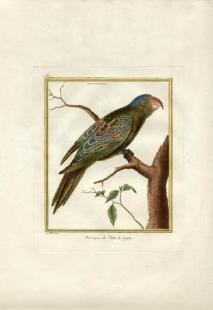 Martinet Parrot Print