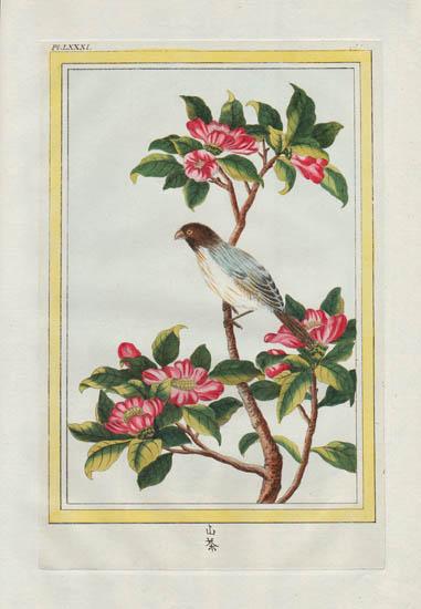 Plate 81, Volume 1