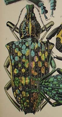 Art Nouveau Insect Prints from Insectes