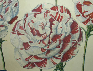 A Group of Carnations, detail