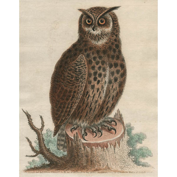 Horned Owl, Plate 227