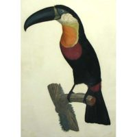 Barraband Toucan Pignancoin No 7