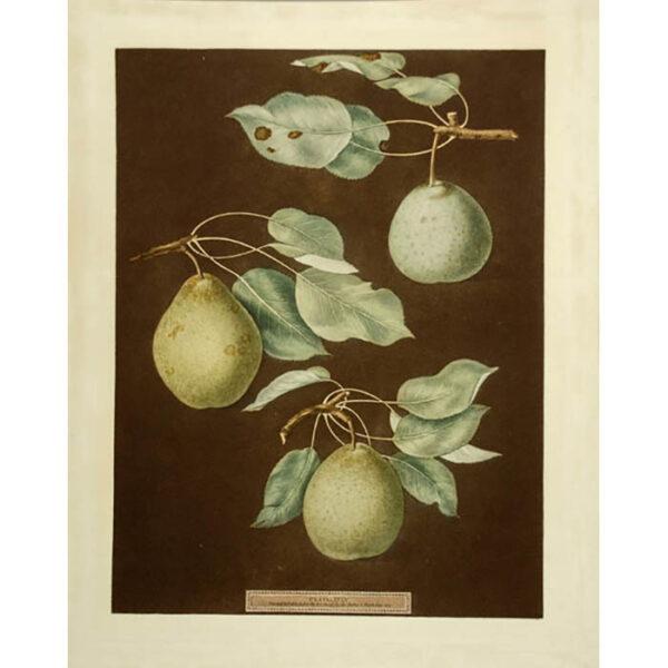 Brookshaw Pears Plate 85