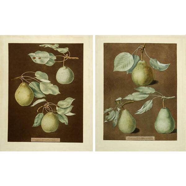 Brookshaw Pears Plates 85 and 86