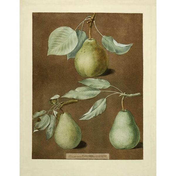 Brookshaw Pears Plate 86