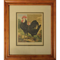 Cassell Prize Winning Poultry Framed Black Spanish