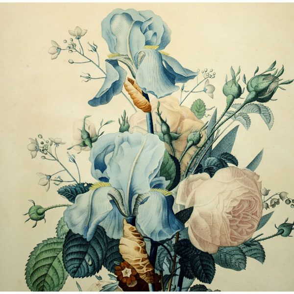 Prevost Antique Botanical Print Bouquet Detail