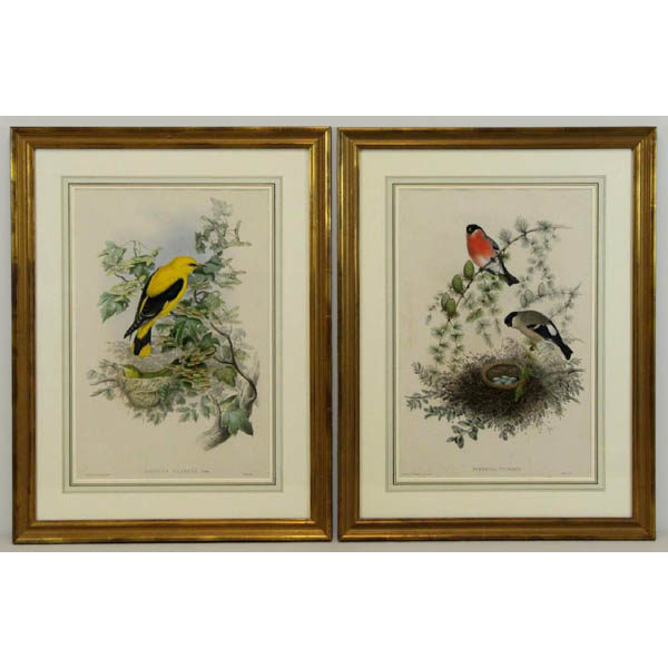 John Gould, Oriolus Galbula, Linn. [Golden Oriole] and Pyrrhula Vulgaris [Bullfinch] from The Birds of Great Britain
