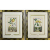 Volckamer Pair of Framed Prints, Plates 164a and 172d