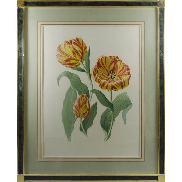 Tulip Study, framed