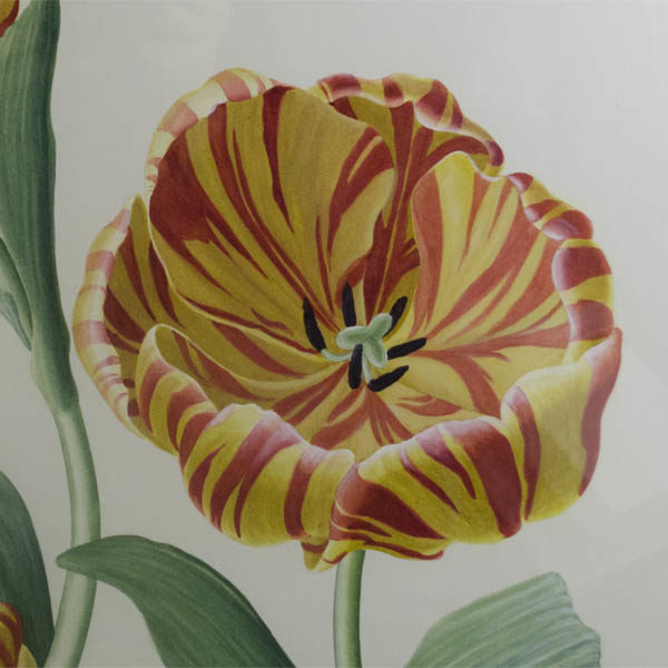 Detail, yellow and red tulip