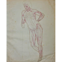 Faune du Capitole [Capitoline Faun] Anatomical Study
