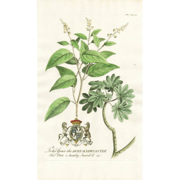 The Balsam; or the Sea-side Sage. Plate 10.