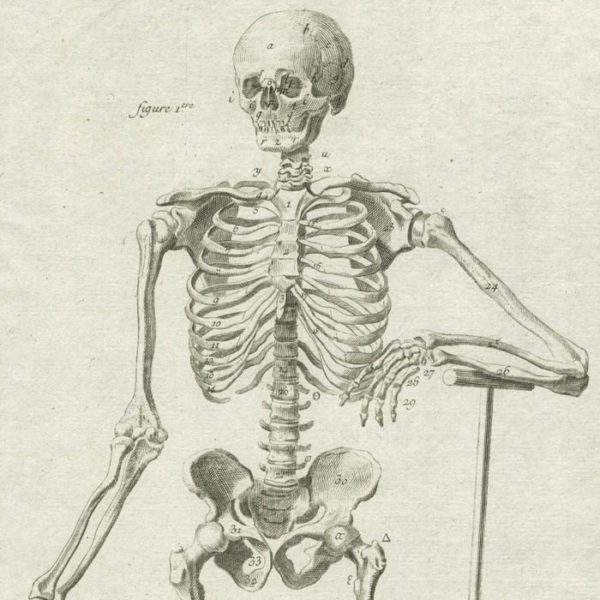 Anatomie, Plate 1 from Diderot's Encyclopedia, detail