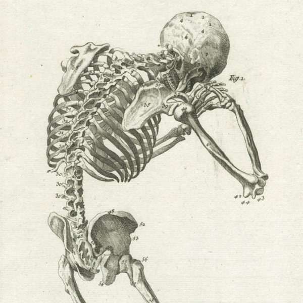 Anatomie, Plate 3 from Diderot's Encyclopedia