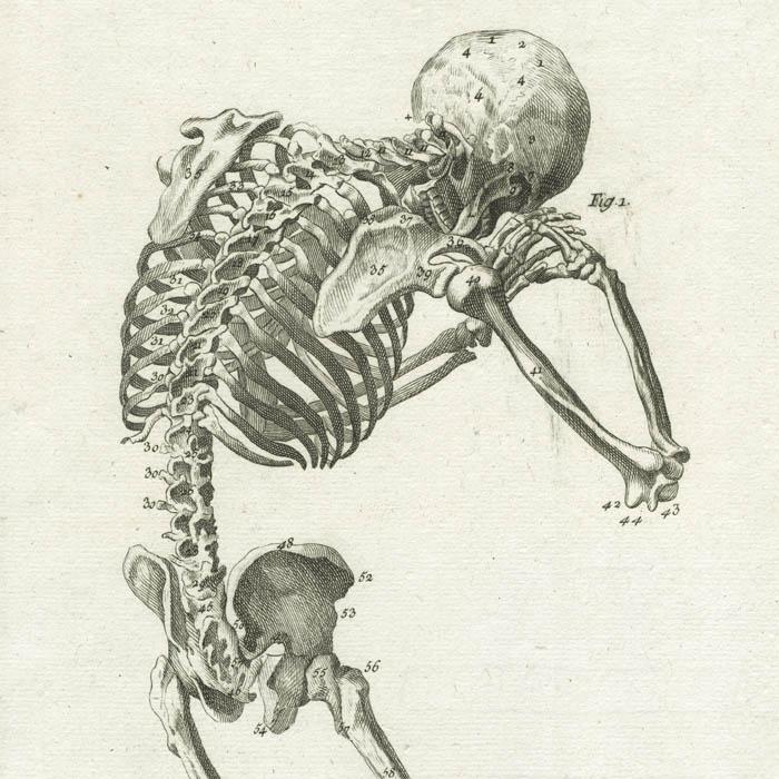 Science Art, Anatomy, Skeletons, Diderot & Alembert\'s Encyclopedie ...