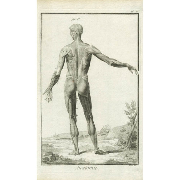 Anatomie, Plate 5 from Diderot's Encyclopedia