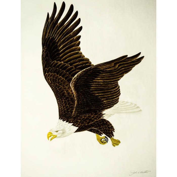 Natural History Art, Birds, Bald Eagle, John Ruthven