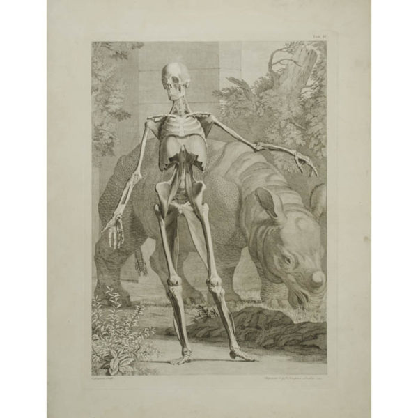 [Skeleton with Rhinoceros, Front View] Plate IV