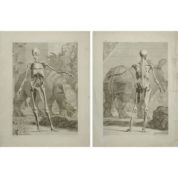 [Skeleton with Rhinoceros] Plates IV and VIII