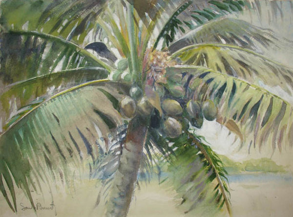 Bernath Coconut Palm