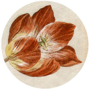 Flower Power tulip icon