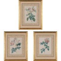 Set of three framed Redoute Roses