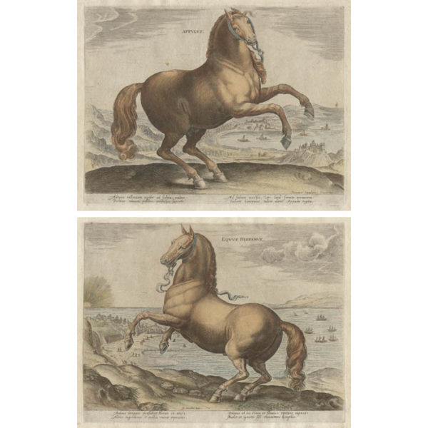 Appulus and Equus Hispanus from Equile Ioannis Austriaci