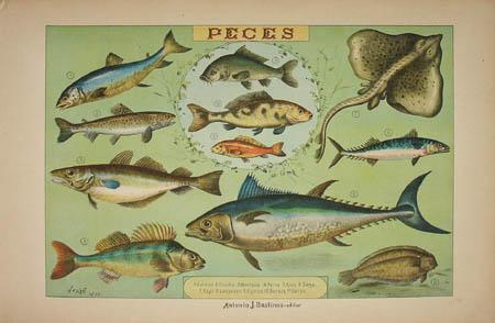 Bastinos Fish Print