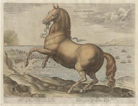 Stradanus horse print