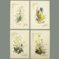 Paul Jerrard 12 Months of Flowers