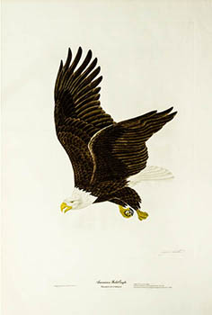 Eagle print by Ruthven