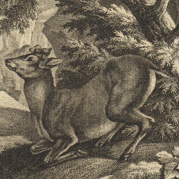 Deer Print from Das Aufsezen oder wachstum des Hirschgeweihes, detail