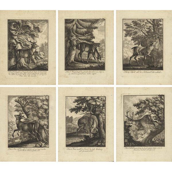 Deer Prints from Das Aufsezen oder wachstum des Hirschgeweihe