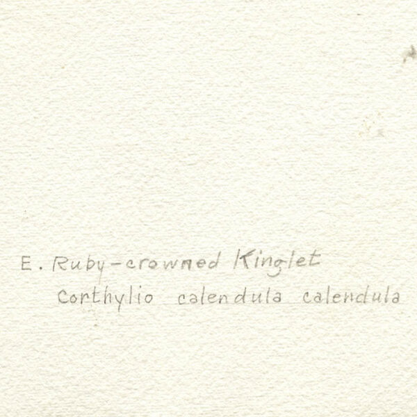 Eastern Ruby-crowned Kinglet, artist's inscription verso