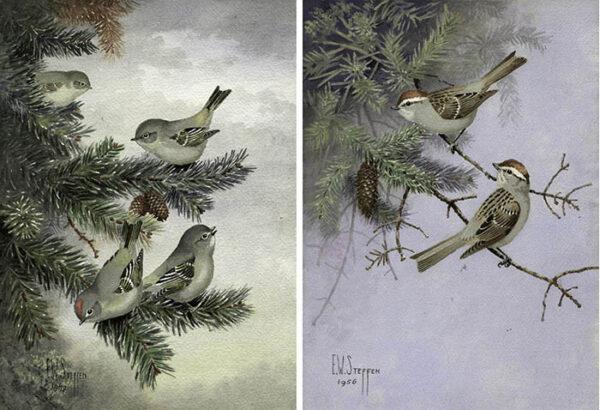Steffen Birds Painting
