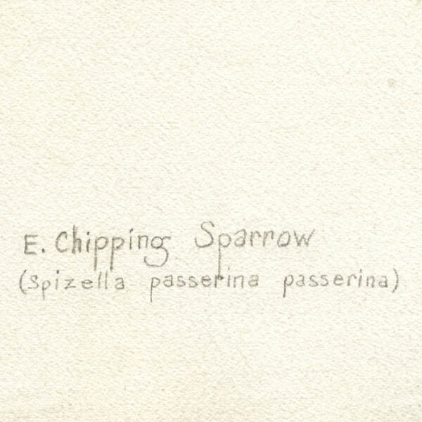 Eastern Chipping Sparrow, artist's inscription verso