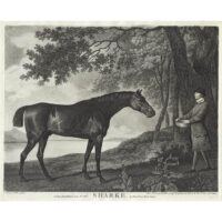 George Stubbs, Sharke