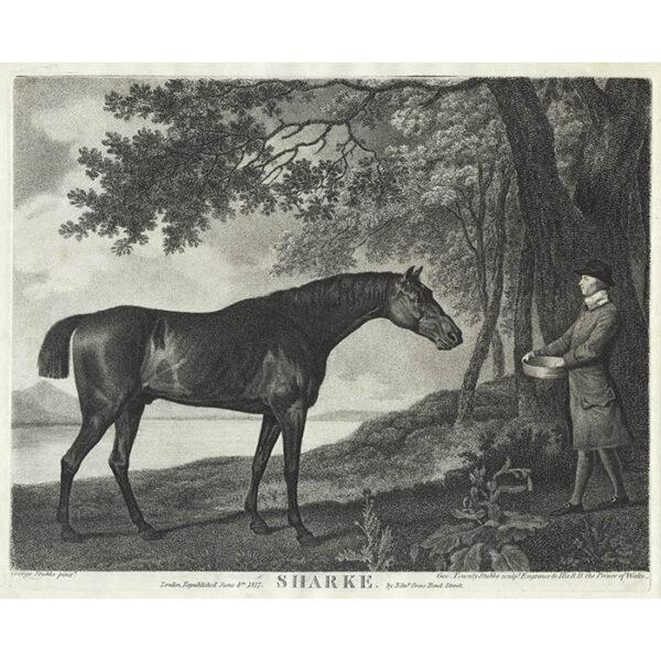 George Stubbs, Sharke