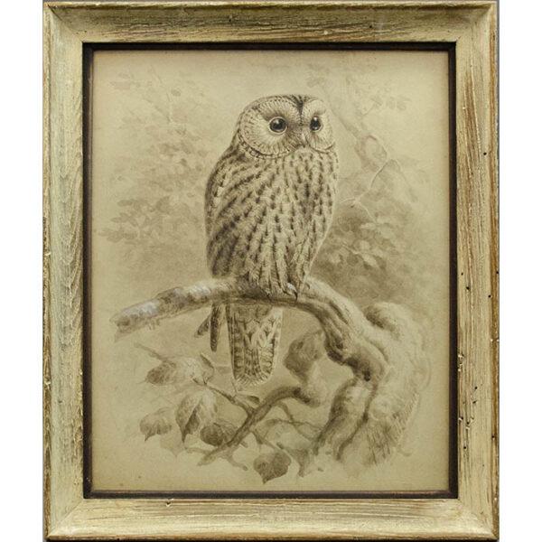 Keulemans, Natural History Study of Owl, framed