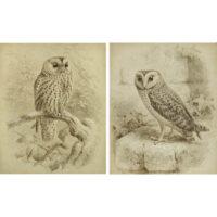 Keulemans, Pair of Natural History Studies of Owls
